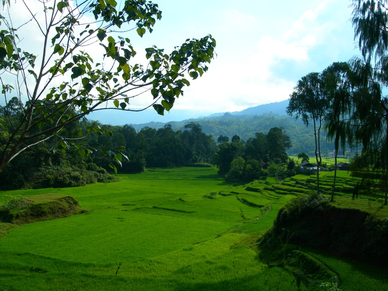 Toraja Highlands
